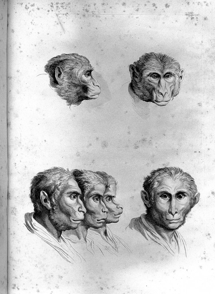 Imagine A World Where Humans Evolved Into These 15 Animals