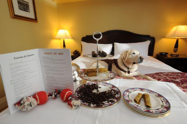 pet-friendly hotel 1