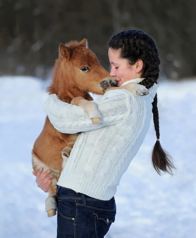 real mini-horses 6