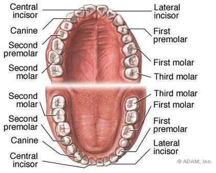 teeth whitening tricks 6