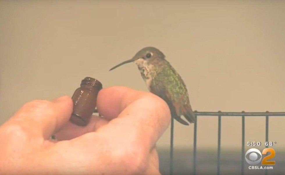 dog saves tiny bird