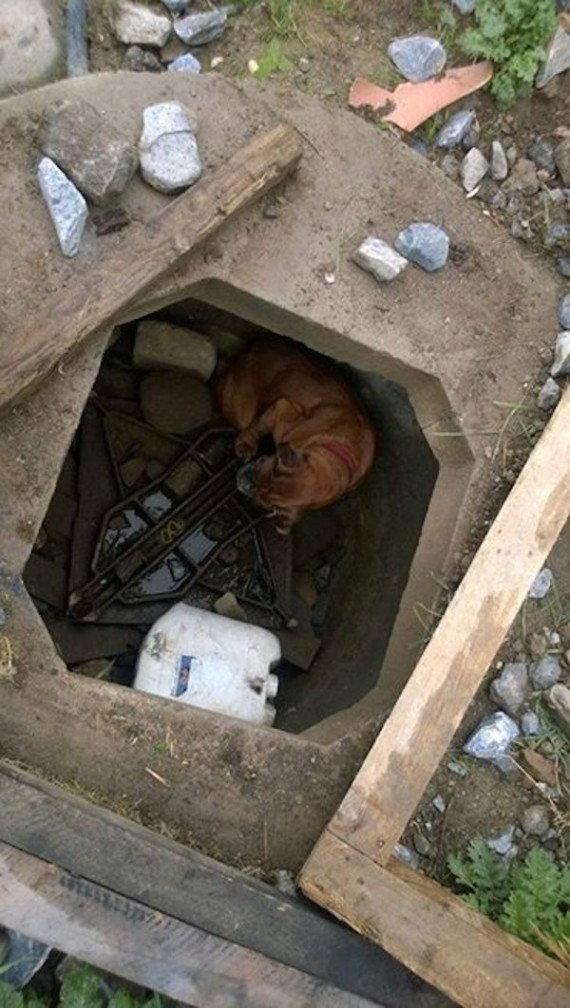 little girl helps dog in hole