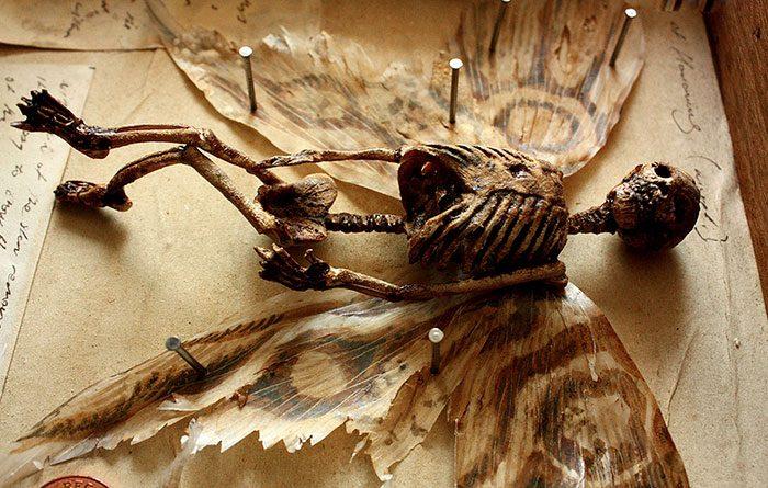 skeletons discovered in basement