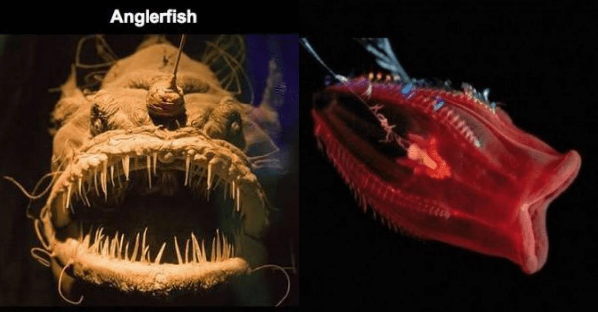 underwater camera captures horrifying creatures in the