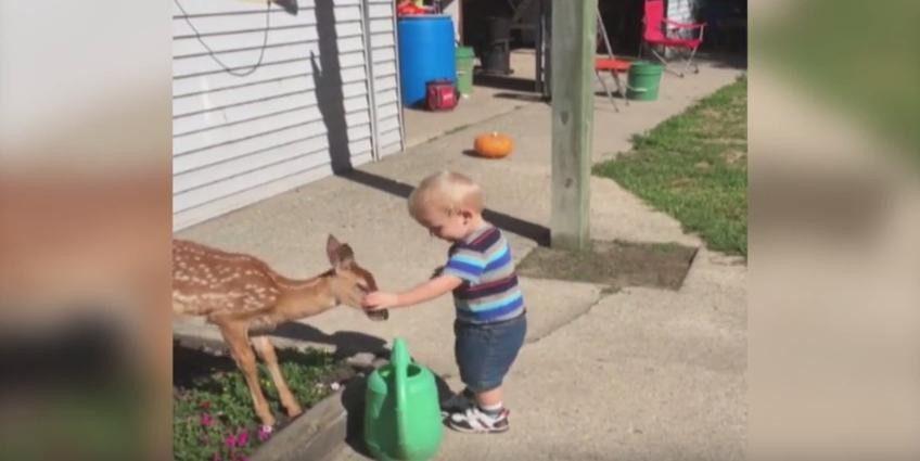 boy meets deer