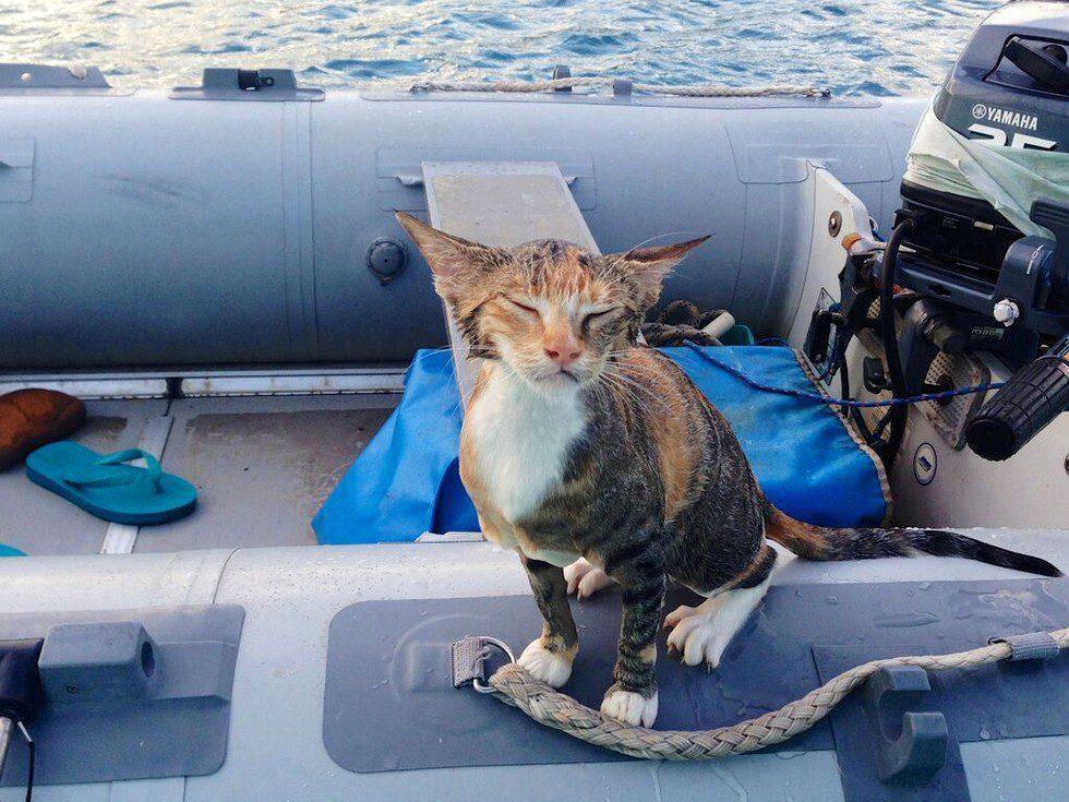 cat sails the world
