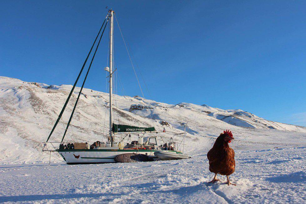 chicken sails around the world