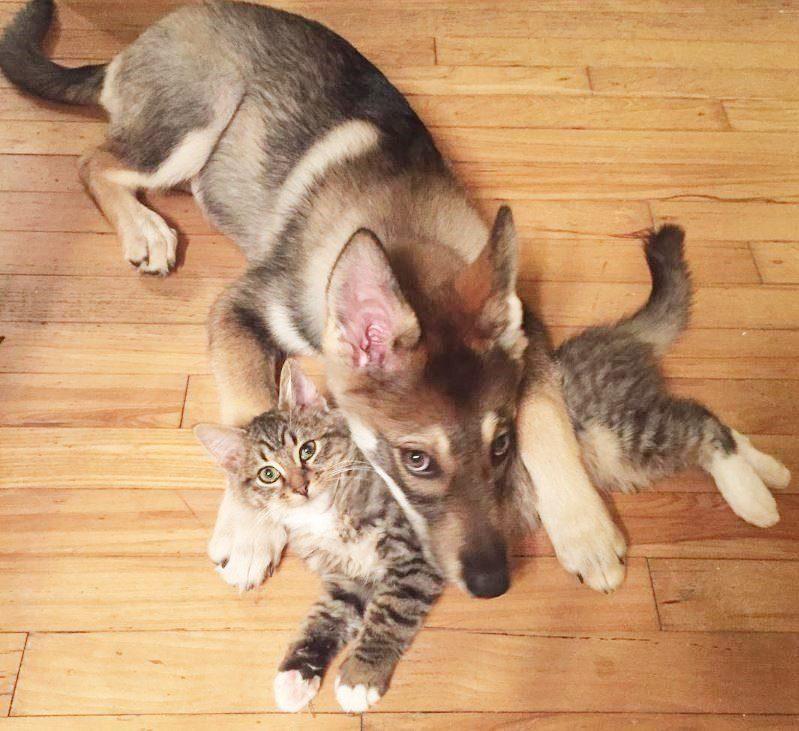 dog picks shelter cat