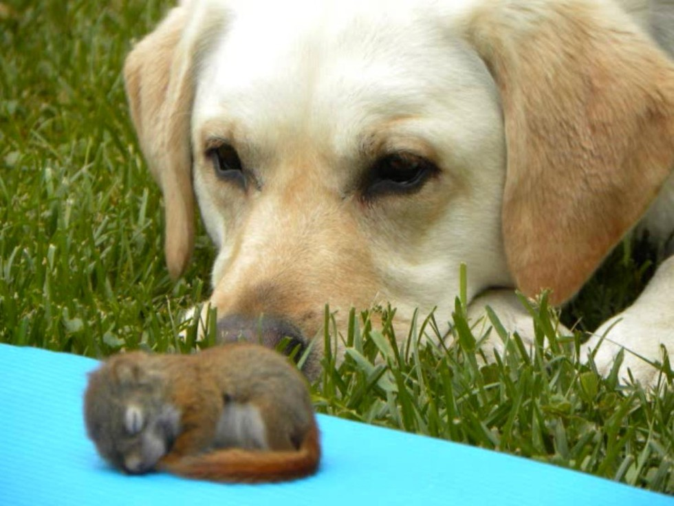 dog watches over squirrel