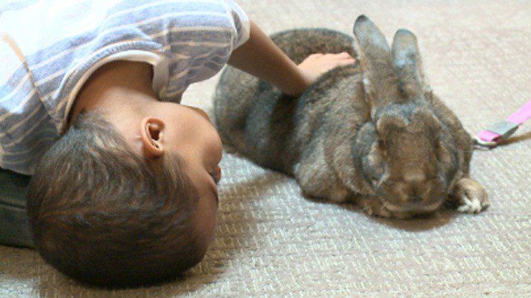 giant rabbits comfort kids