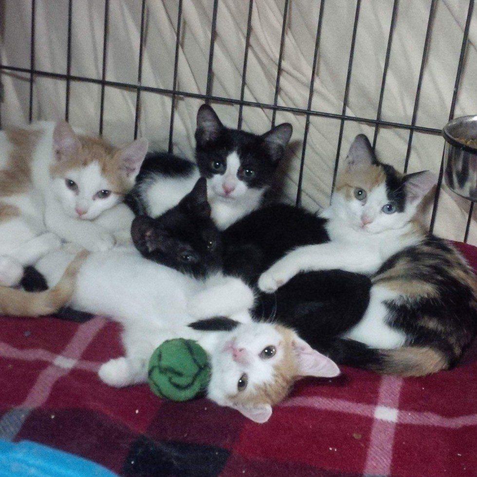litter of kittens rescue