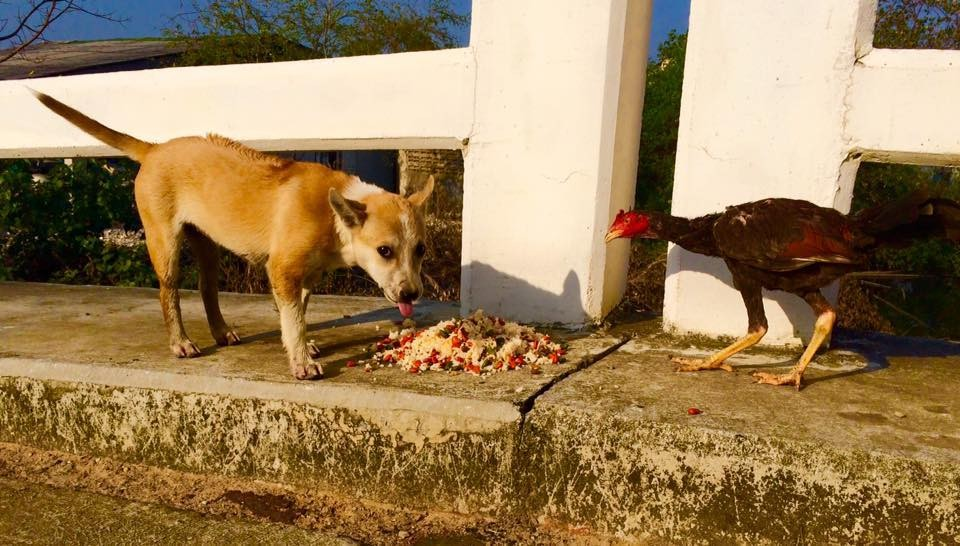 man feeds stray dogs