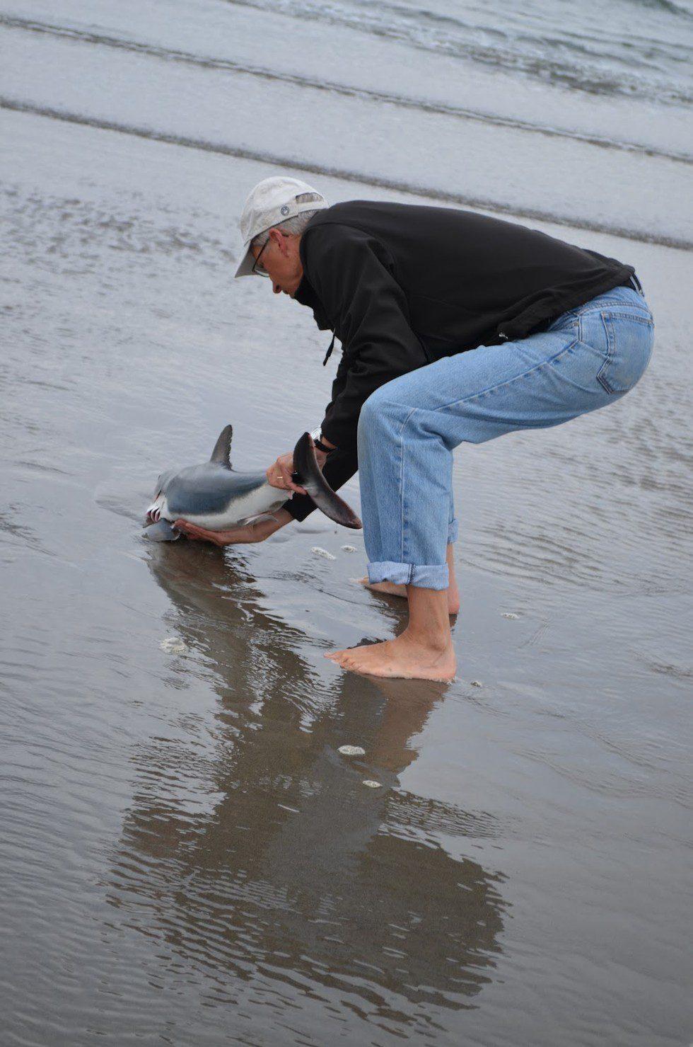 man rescues shark