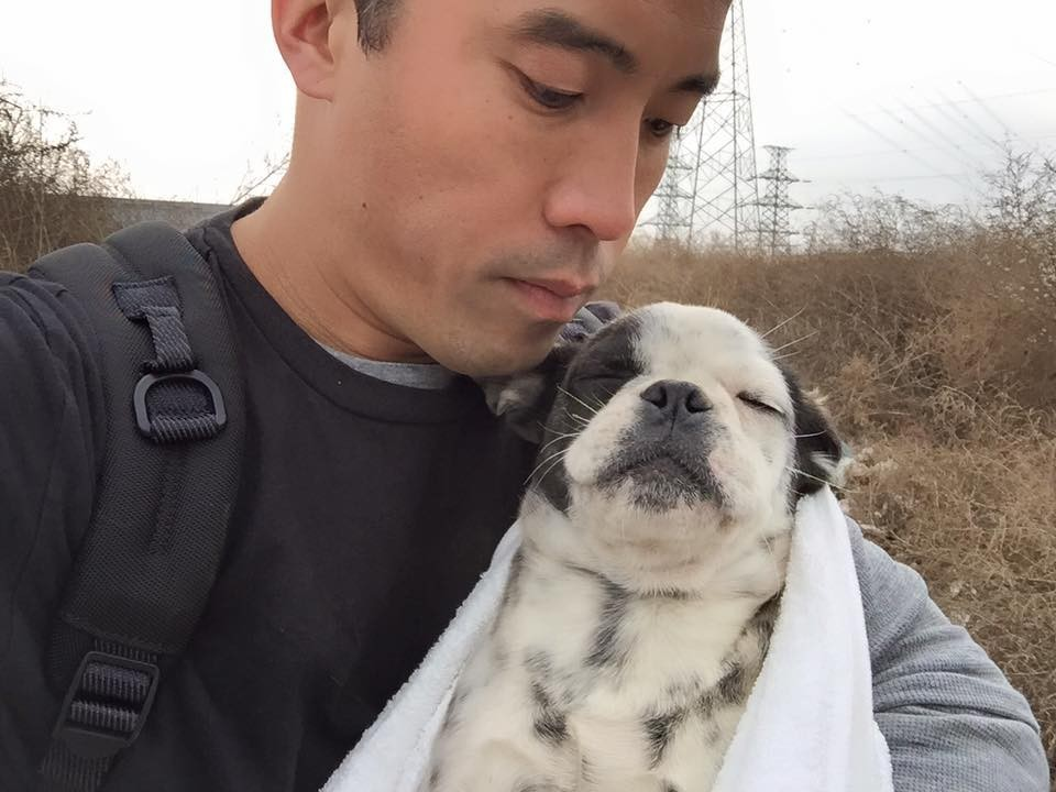 man risks life to save dogs