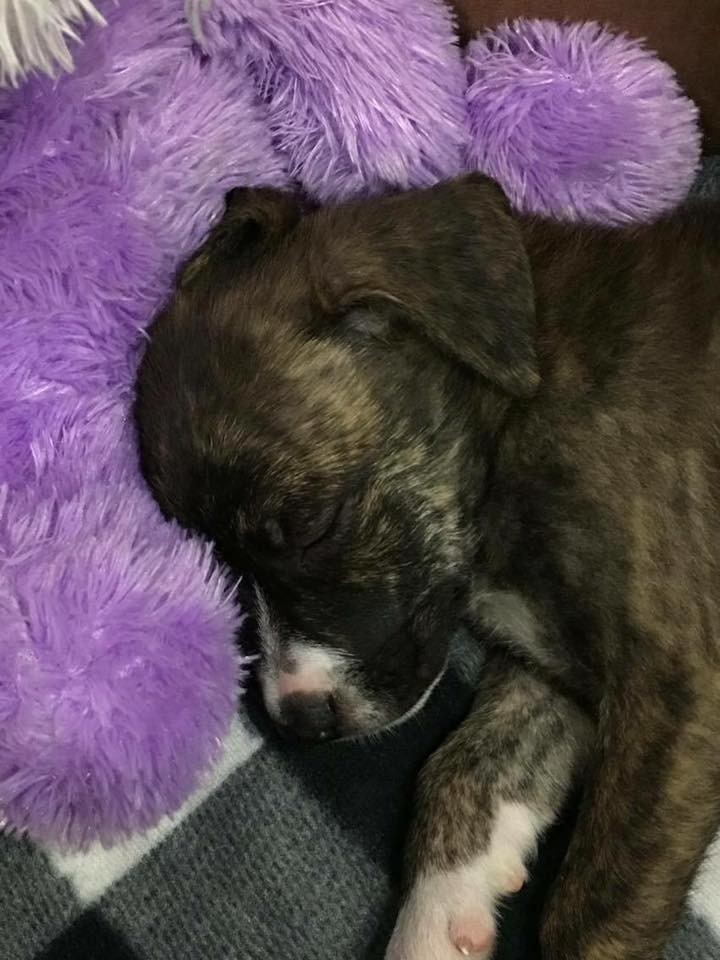 officer rescued homeless puppy