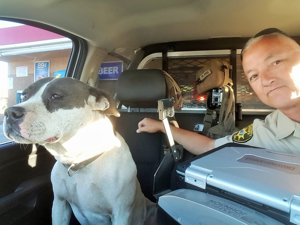 officer takes selfies with lost dog
