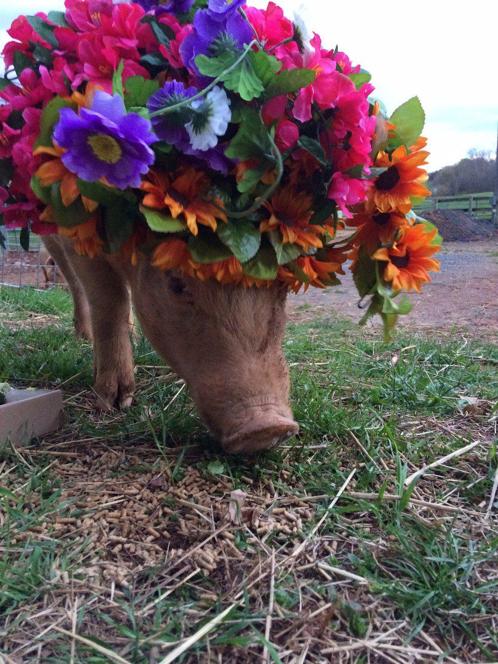 pigs flower crowns