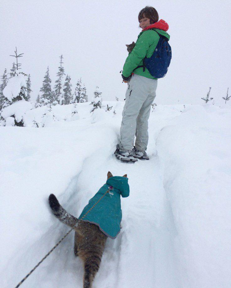 rescue cats outdoor adventures