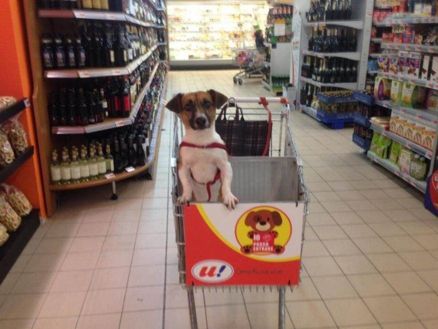 shopping carts for pets