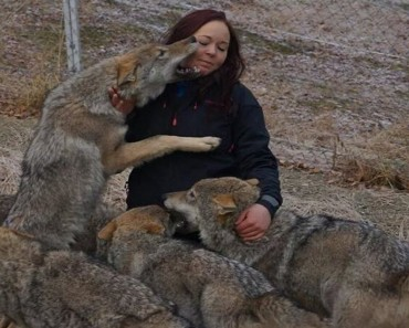 wolves act like puppies