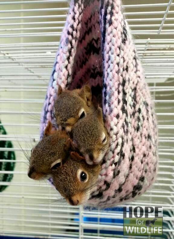 woman saved hundreds of squirrels