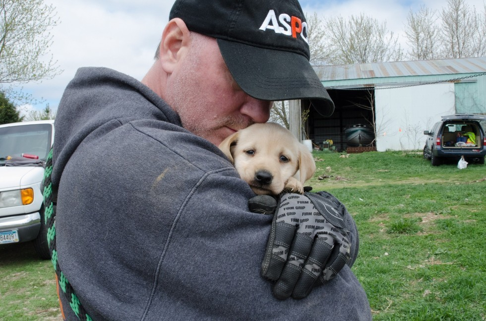 dogs rescued from puppy mill