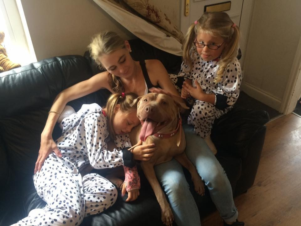 little girl reunited with dog