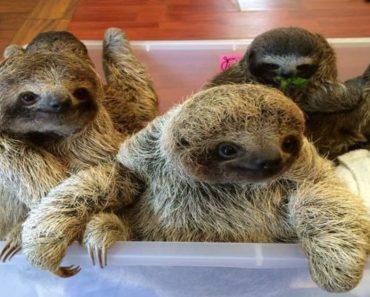 sloth videos