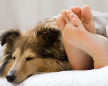 benefits of dog sleeping in bed