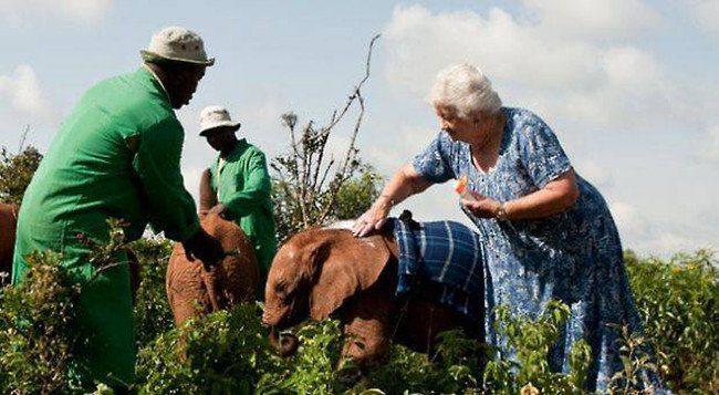 woman elephants