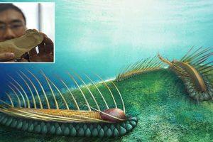 strange fossilised sea creature