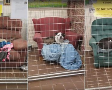 chairs for homeless pups