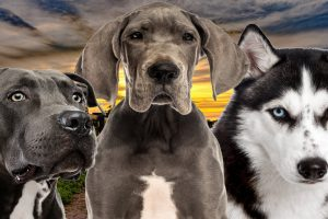 kentucky dog breed restrictions