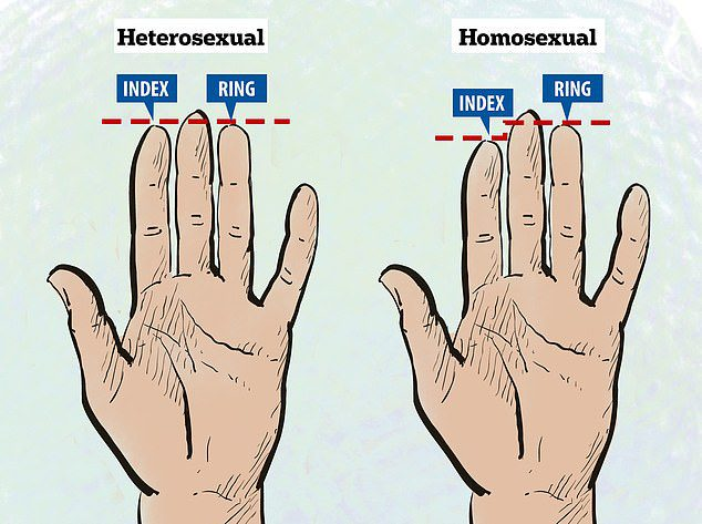 finger length sexuality