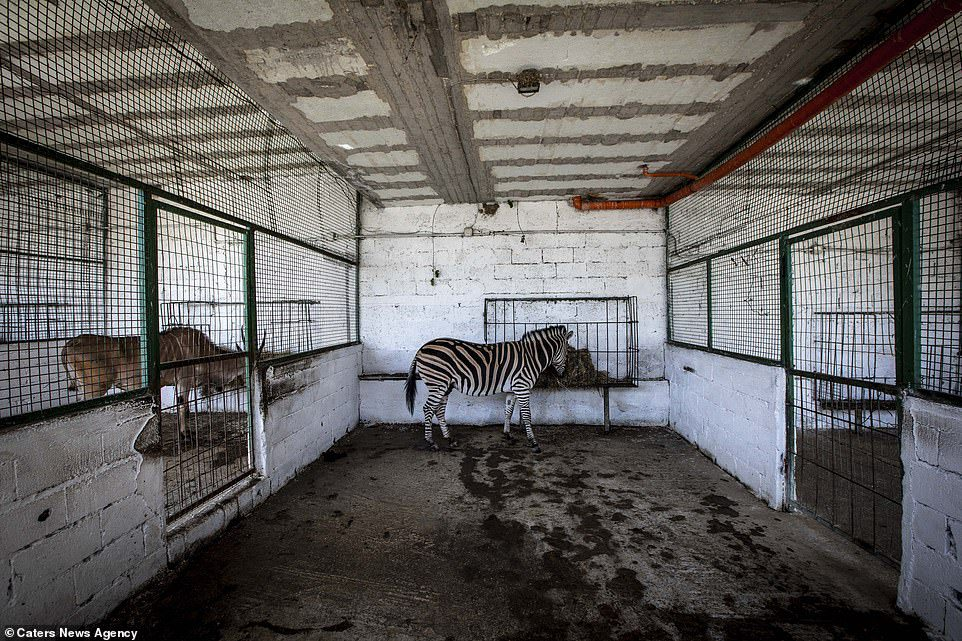 zoo from hell animal rescue