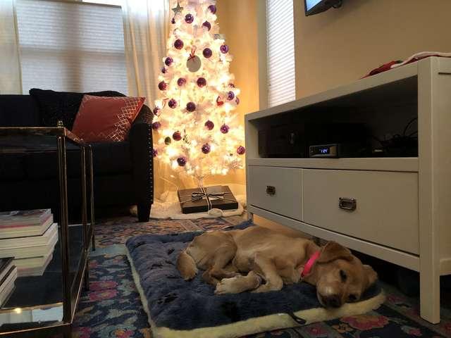 random dog in living room