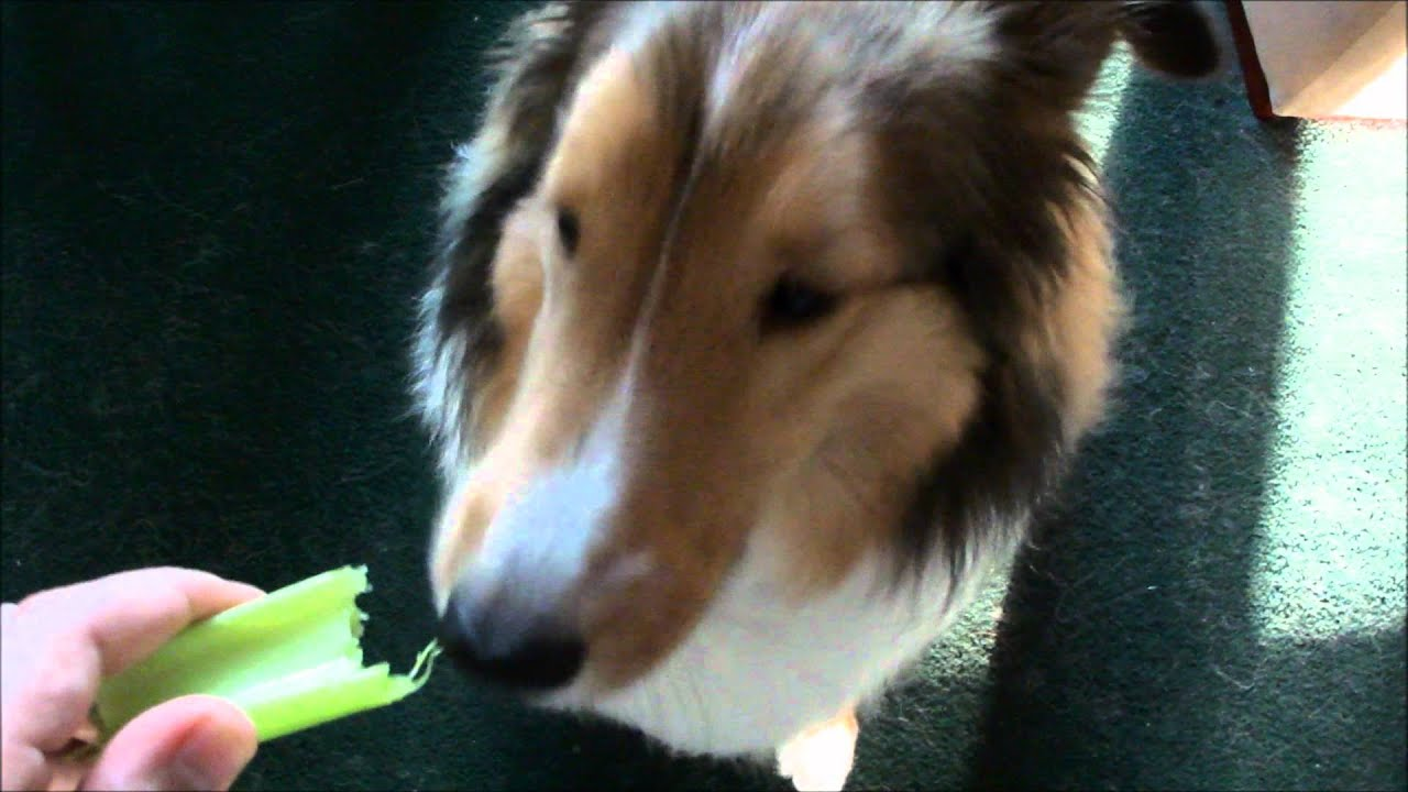 celery for dogs