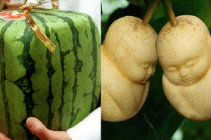 most expensive fruits