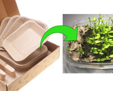plant plates